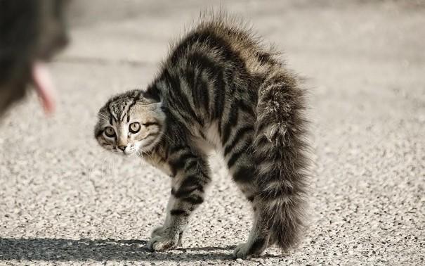 gatto_arrabbiato_1440x900