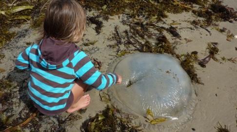 Les sciences naturelle, élue meilleure solution pour occuper vos enfants pendant l'été
